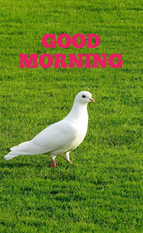 Picture: Peace Good Morning