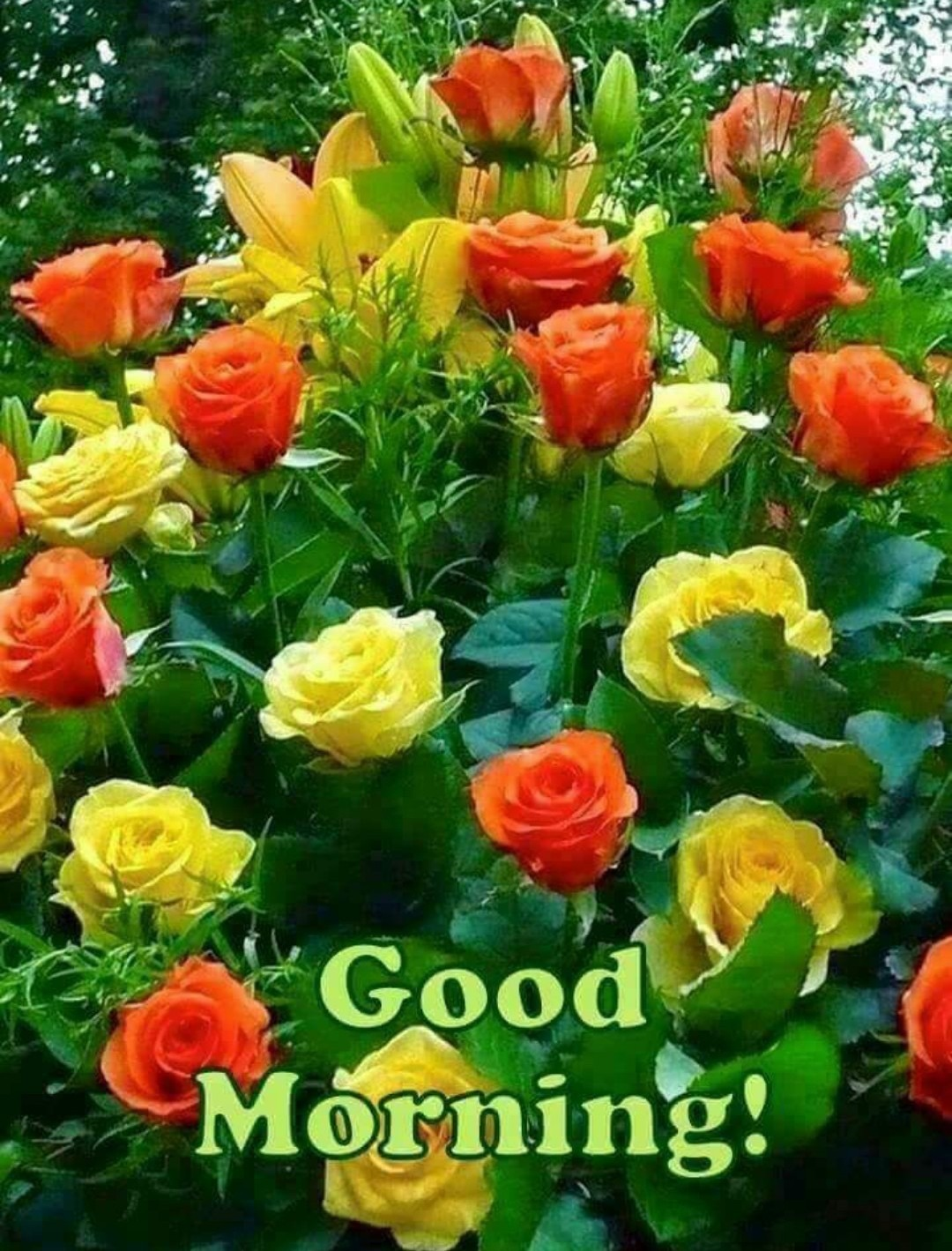 Good Morning With Red And Yellow Roses Desicomments Com