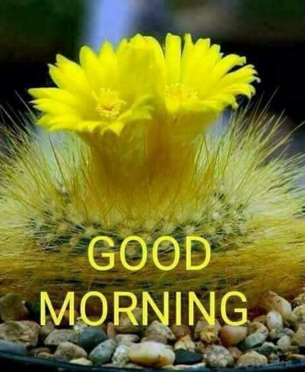 Good Morning With Yellow Flower