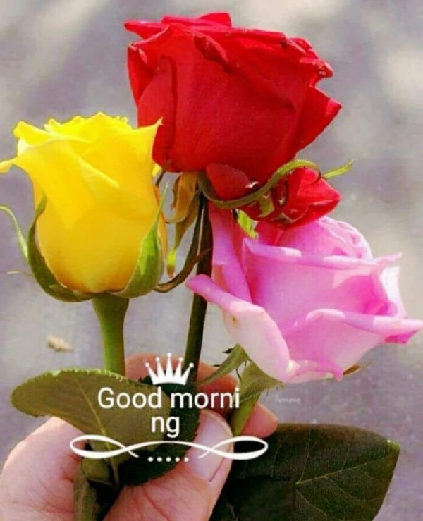 Picture: Good Morning With Colorful Roses