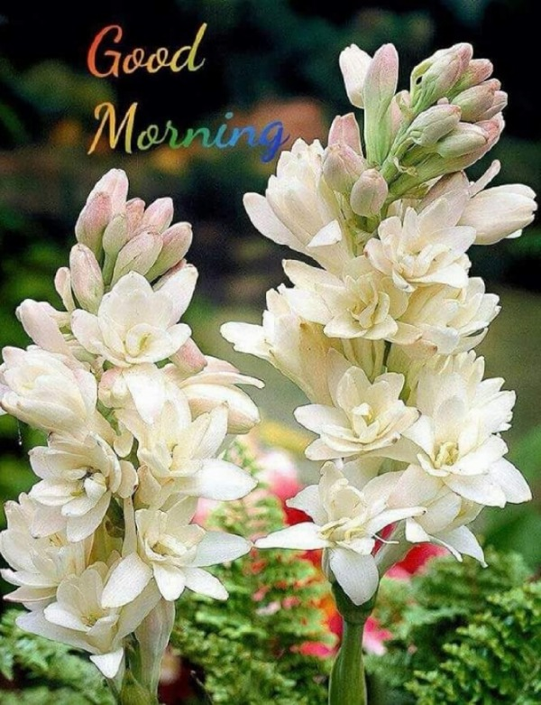 Picture: Good Morning With Flowers