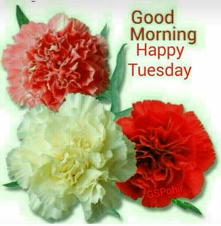 Image result for tuesday images