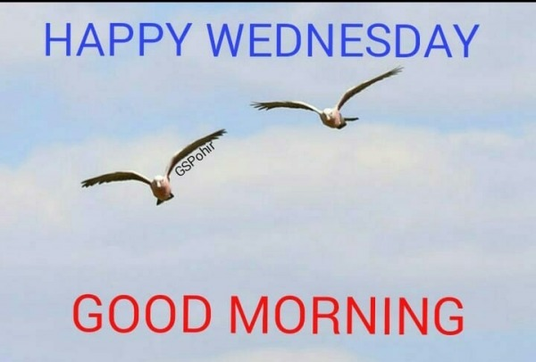 Picture: HAPPY WEDNESDAY