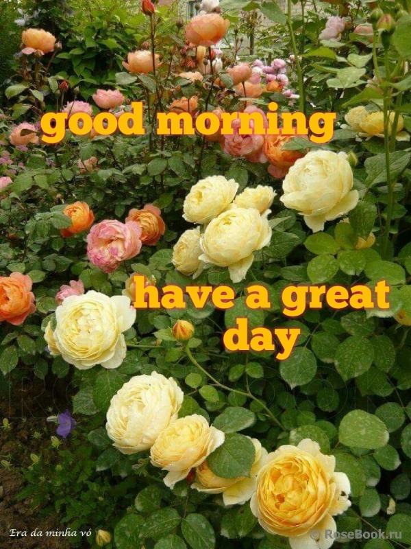 Picture: Good Morning Have A Great Day