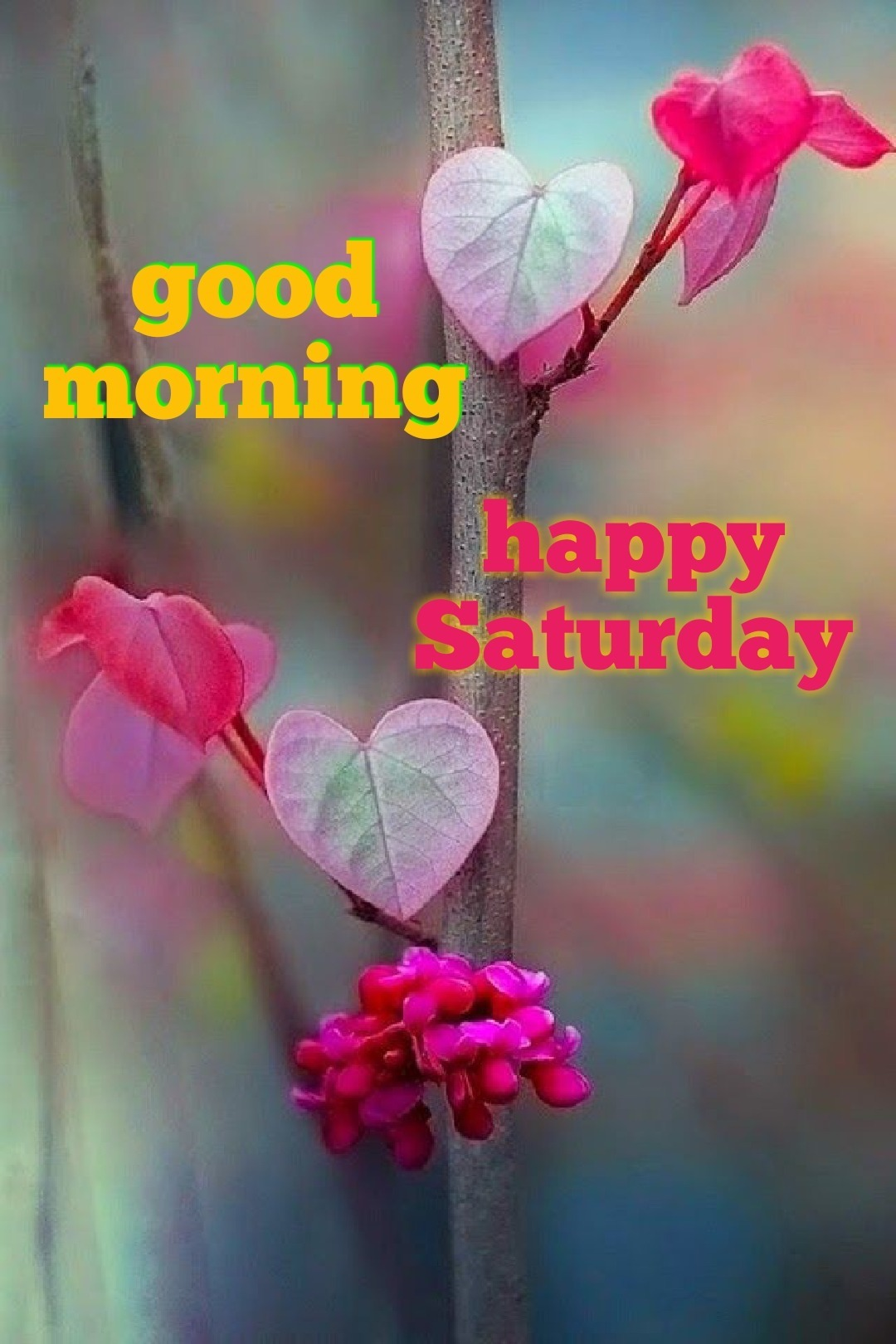 Saturday Pictures Images Graphics