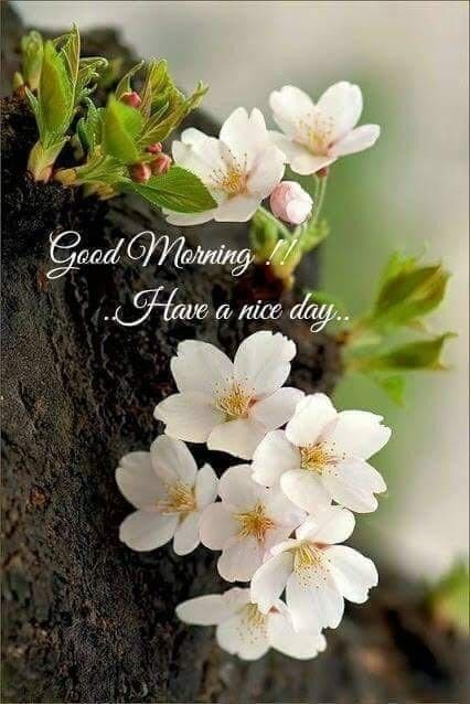 Picture: Good Morning Have A Nice Day