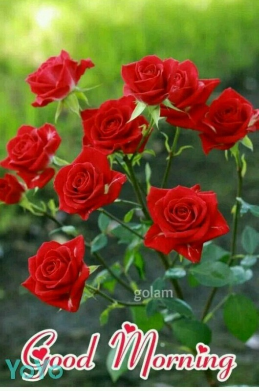 Picture: Good Morning With Red Roses