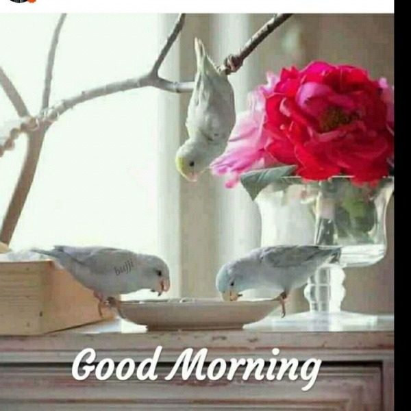 Picture: Beautiful Good Morning With White Parrots