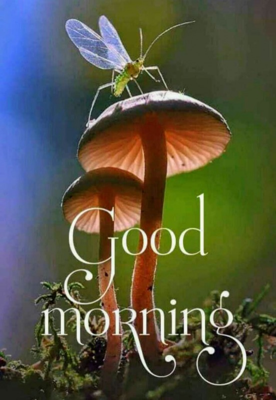 Picture: Awesome Good Morning