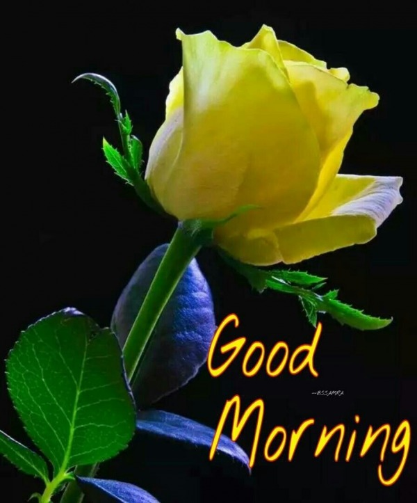 Picture: Good Morning With Yellow Rose