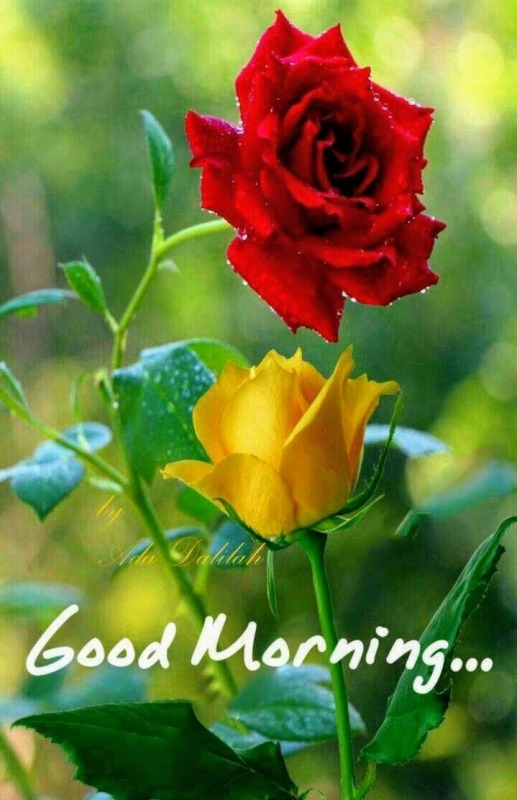 Good Morning With Red And Yellow Roses