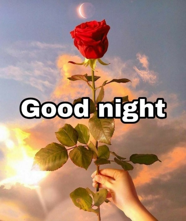Picture: Good Night With Rose