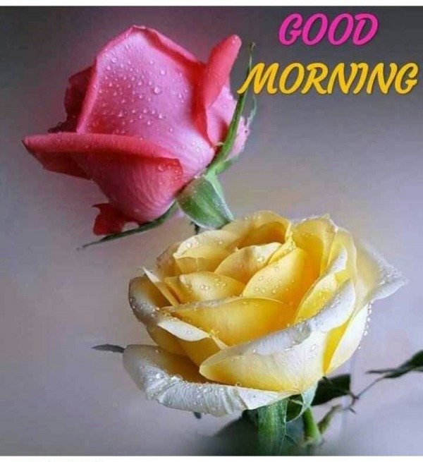 Good Morning With Yellow And Pink Rose