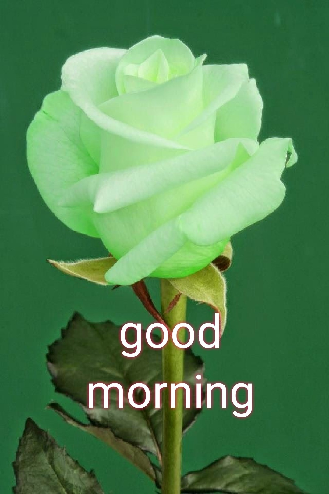 Good Morning Pictures Images Graphics Page 2