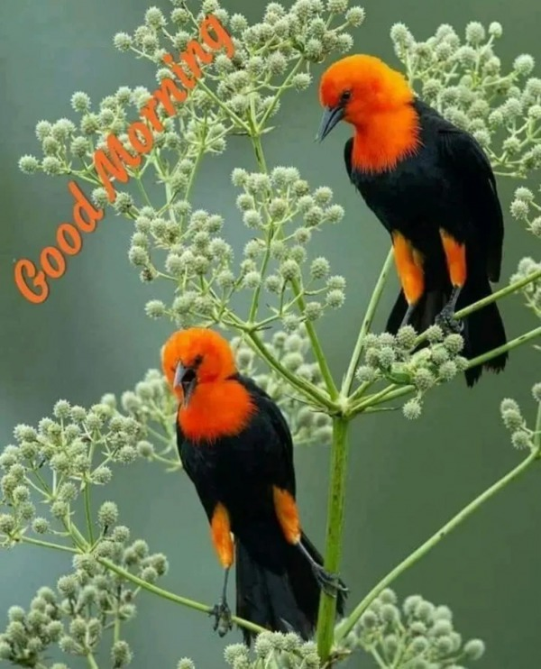 Good Morning With Beautiful Birds