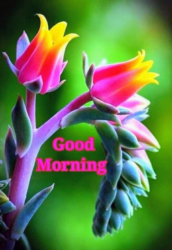 Colourful Good Morning Image
