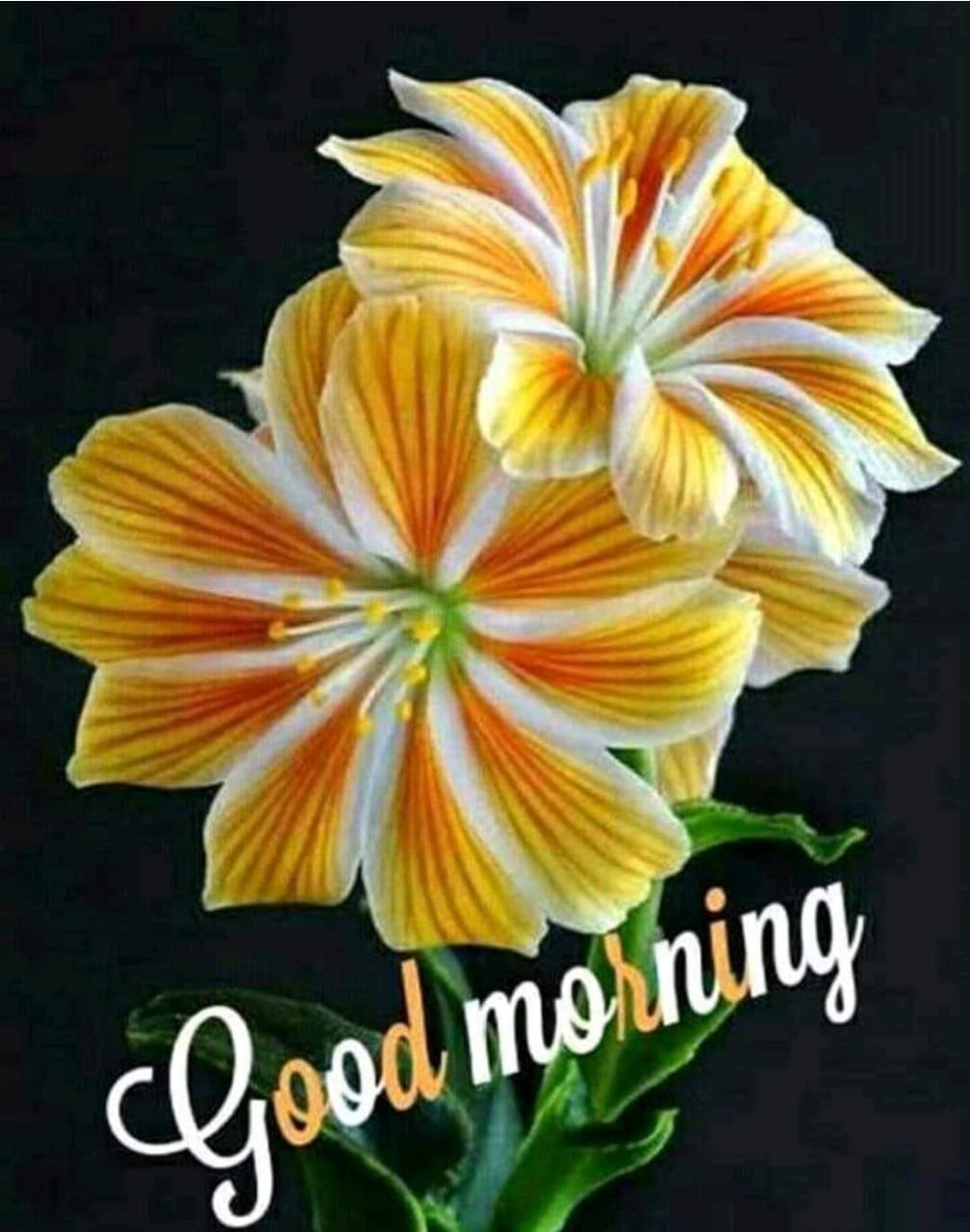 Good Morning Flowers Images In Marathi - Flowers Healthy