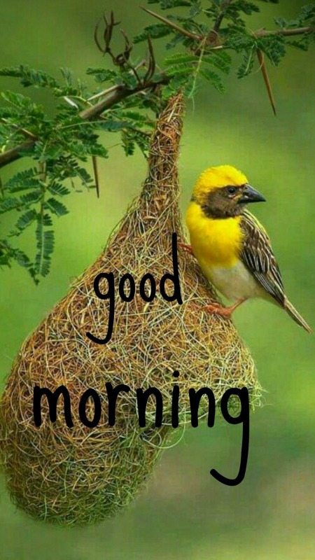 Picture: Wonderful Good Morning Photo