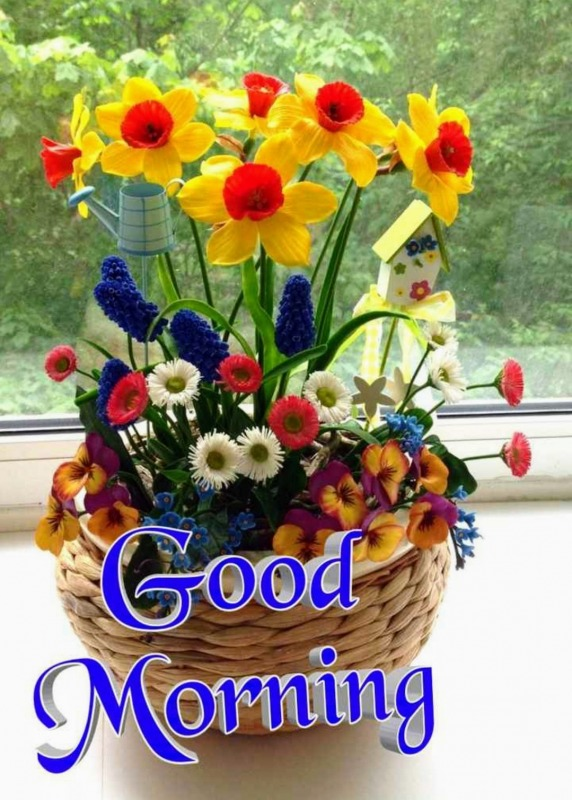 Picture: Beautiful Morning Pictures