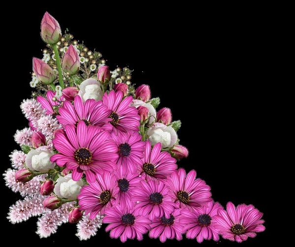 Image Of Beautiful Flowers