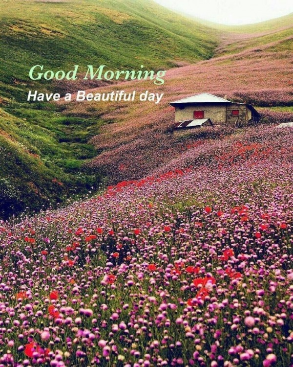 Picture: Have A Beautiful Day
