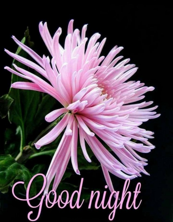 Beautiful Picture Of Good Night