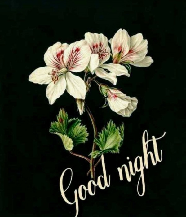 Awesome Image Of Good Night