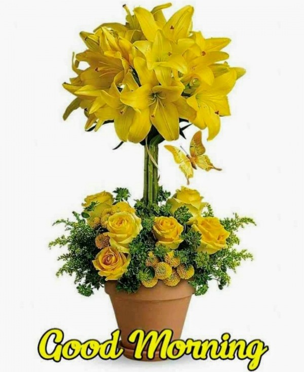 Beautiful Good Morning With Yellow Roses
