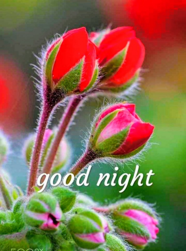 Picture: Good Night Pic