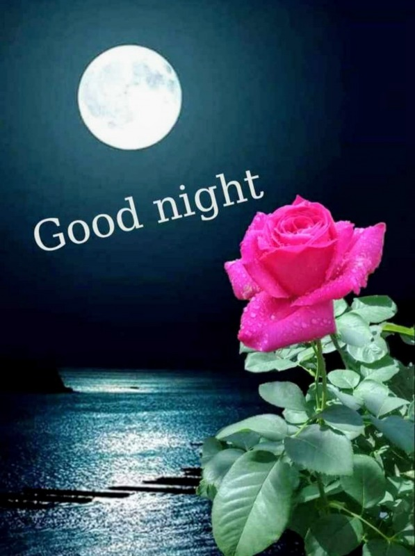 Good Night Picture