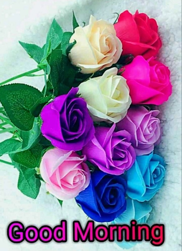 Good Morning With Colorful Roses