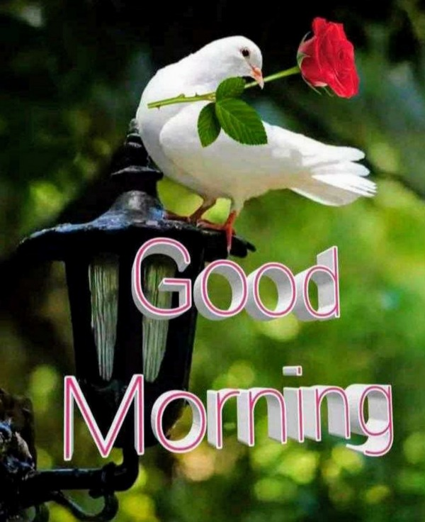 Wish You A Good Morning
