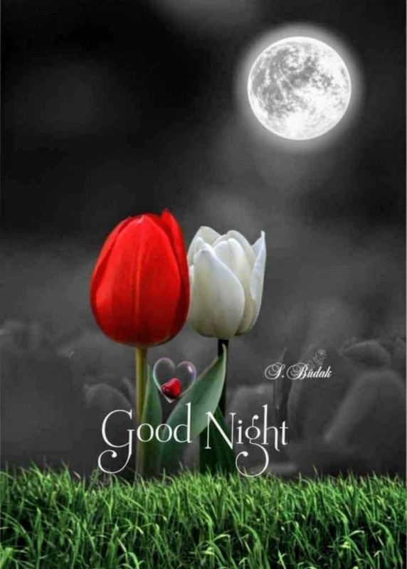 Great Image Of Good Night