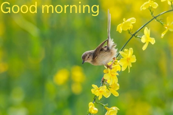 Picture: Picture Of Good Morning