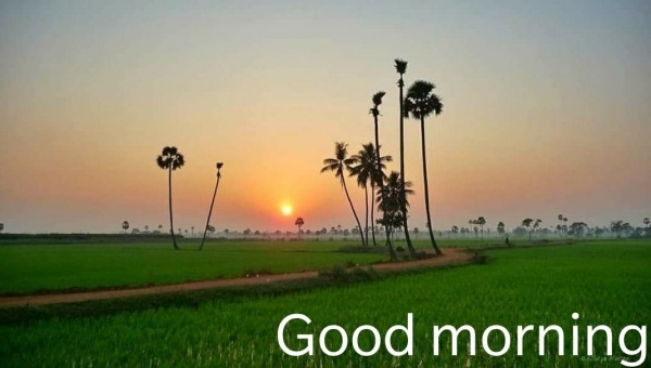 Picture: Good Morning  Pic