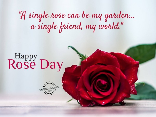 Picture: A single rose can be my garden, Happy rose day