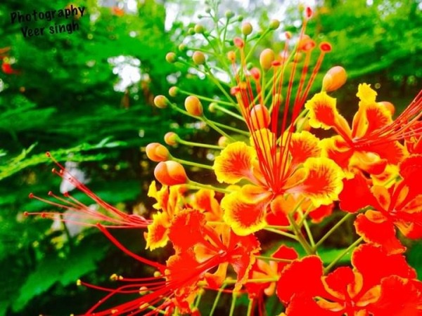 Image Of Beautiful Flower