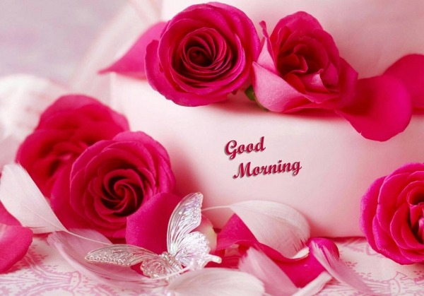 Awesome Roses Good Morning Picture