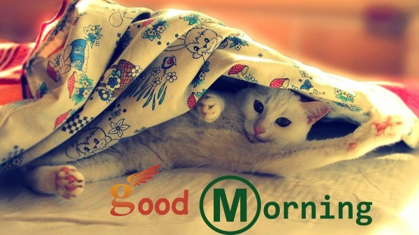 Good Morning With Cat