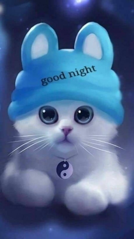 Good Night Kitty