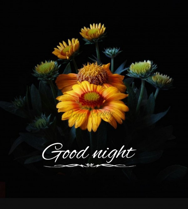 Image Of Good Night