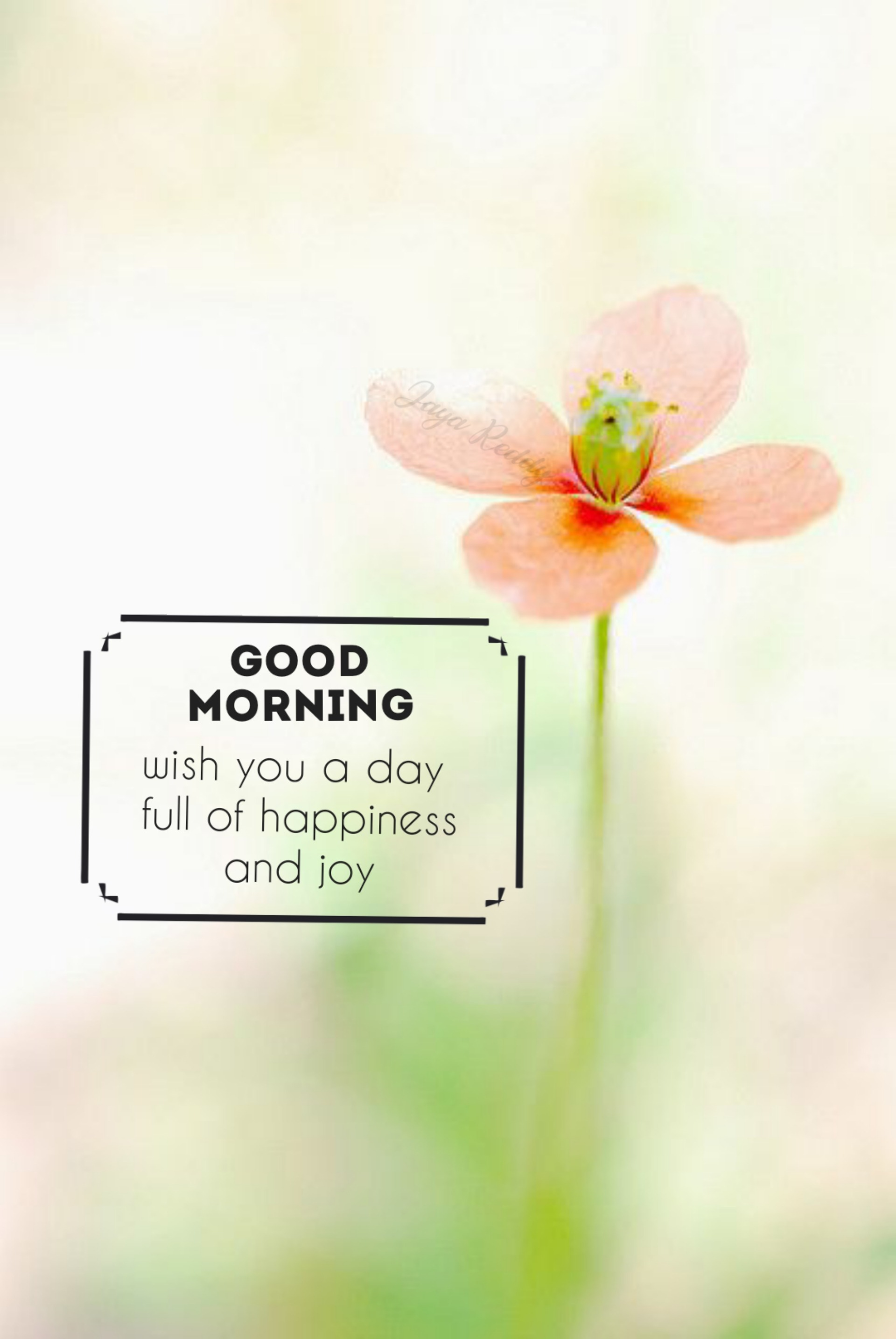 Wish You A Day Full Of Happiness   DesiComments.com