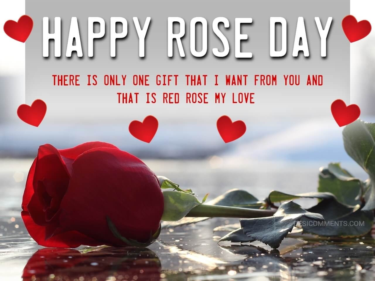 Rose Day Hd Wallpaper