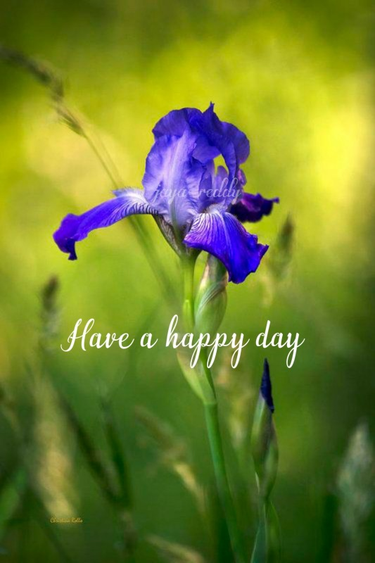 Have A Happy Day