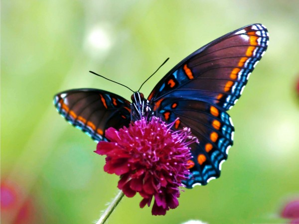 Picture: Butterfly