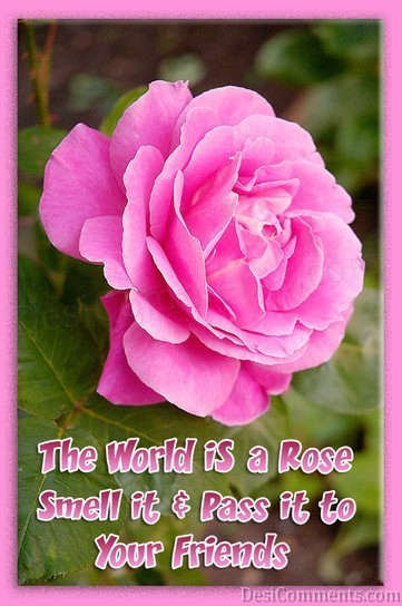 The World Is A Rose