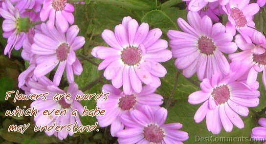 Flowers Are Words