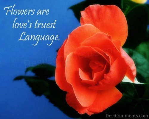 Love's Truest Language