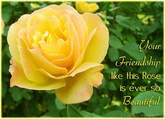 Friendship Like Rose