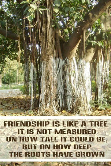 Friendship Is Like A Tree